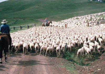 Shearing Contractors' Association